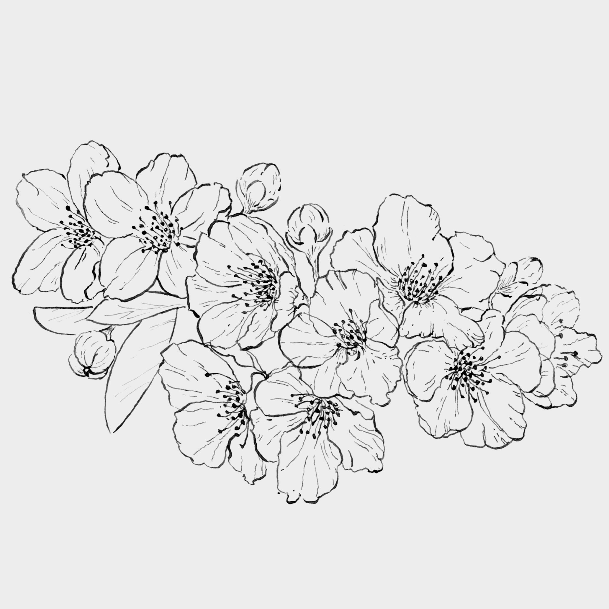 Flor de Cerejeira (Bico de Pena).