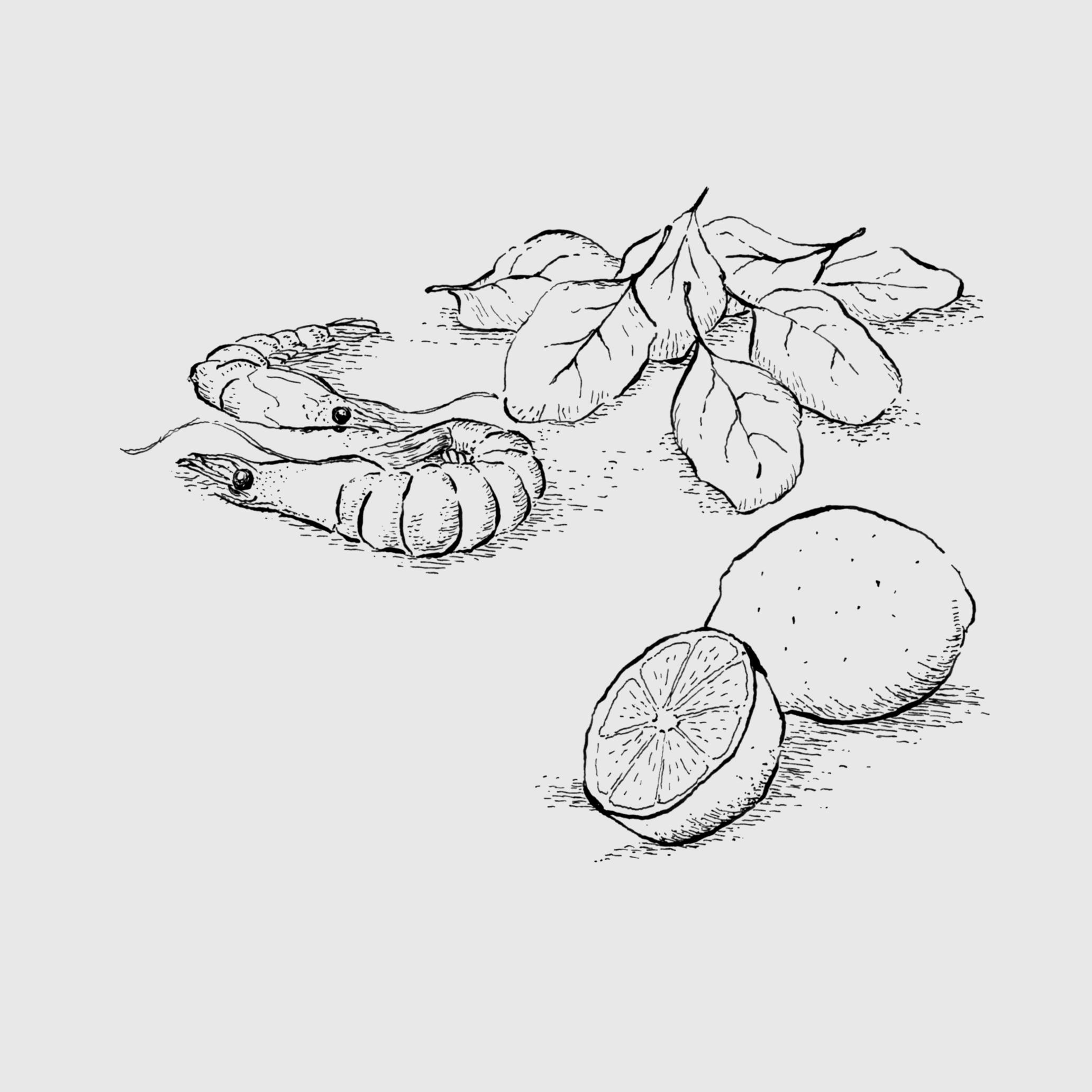 Ilustração 3 (Bico de Pena).